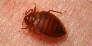 When do you need a lawyer for bedbugs understanding for Bed bug litigation